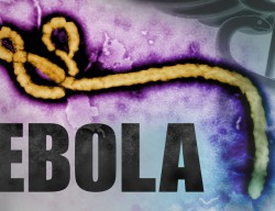 Ebola, Africa, Pets