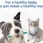 pet-dental, pet-advice, reduced-cost-veterinary-care,