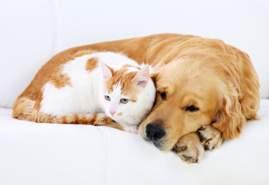 cat + dog sleeping